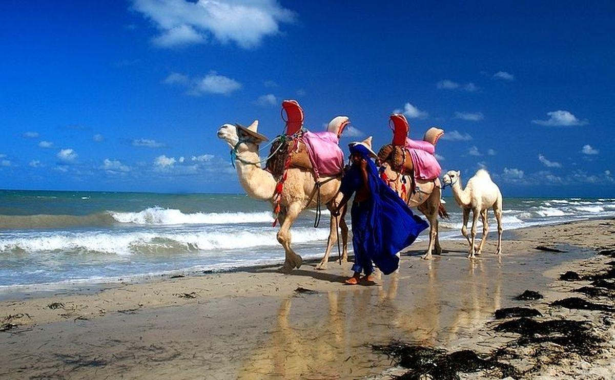 Тунис отдых фото море экскурсий